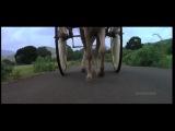Сборник клипов из фильма